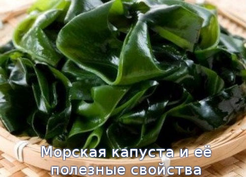 Морская капуста и её полезные свойства